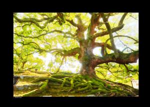 just yello tree of expo